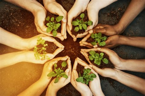 What is companion planting? - | WellBeing