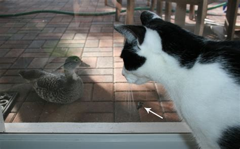 Daisy the Curly Cat: Duck, Duck, Poop