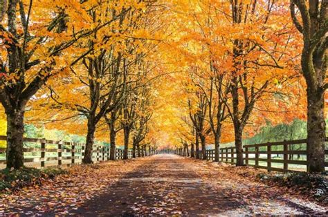 Why Trees Shed Their Leaves In Autumn - AAA Tree Lopping