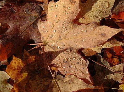 Why trees shed their leaves | Earth | EarthSky