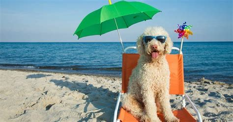 This Website Will Help You Plan Your Pet-Friendly Vacation